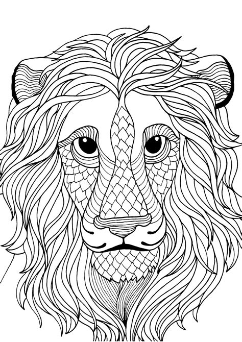 lion adult colouring page colouring  sheets art