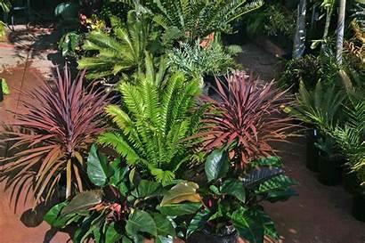 Tropical Plants Landscaping Outdoor Garden Landscape Plant