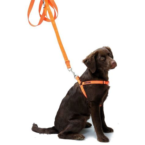 farm land hundegeschirr safety dog signalorange