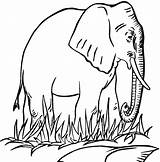 Coloring Pages Elephant Printable sketch template