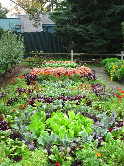 images  edible landscaping ideas  pinterest