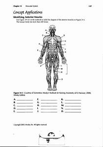Human Anatomy Labeling Worksheets Human Body Muscle Diagram Worksheet Human Anatomy Diagram