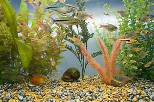 Optimale Aquarium Temperatur : optimal tank temperatures for a saltwater aquarium ~ Yasmunasinghe.com Haus und Dekorationen