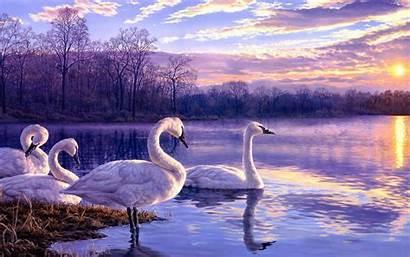 Swans Lake Dawn Desktop Morning Resolution Cloud