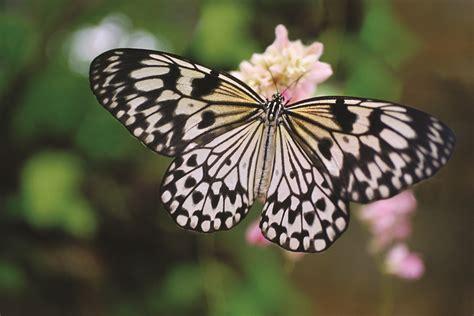 Exotic butterflies at Al Noor Island - Trending Dubai