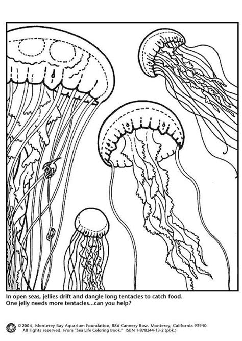 coloring page jellyfish  printable coloring pages