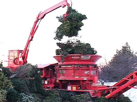 how to start a christmas tree recycling program