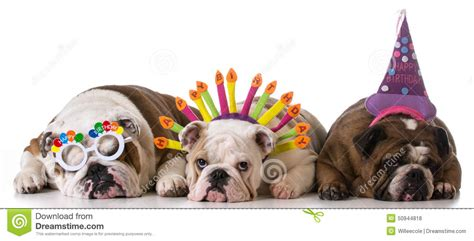 Chiens D'anniversaire Photo Stock. Image Du Down, Canin