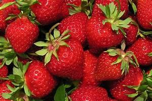 Plant De Fraise : ac saint pierre fraisier plant de fraises ~ Premium-room.com Idées de Décoration