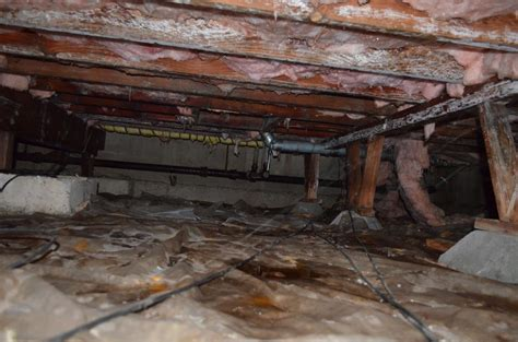 Floor Joist Crawl Space by Mold Growth On Joists In Crawlspace Testing Cleanup