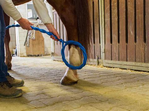 willbefine der reha service fuer pferde und andere tiere