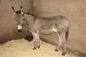 Fundraiser by Alice Simpson : Tinker the Donkey's Brush W