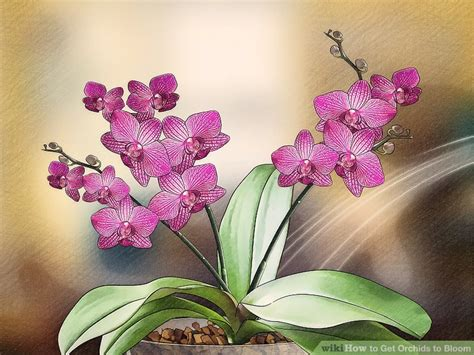 blooming orchids 3 ways to get orchids to bloom wikihow