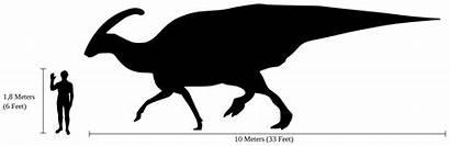 Human Parasaurolophus Comparison Svg Facts Compared Metres