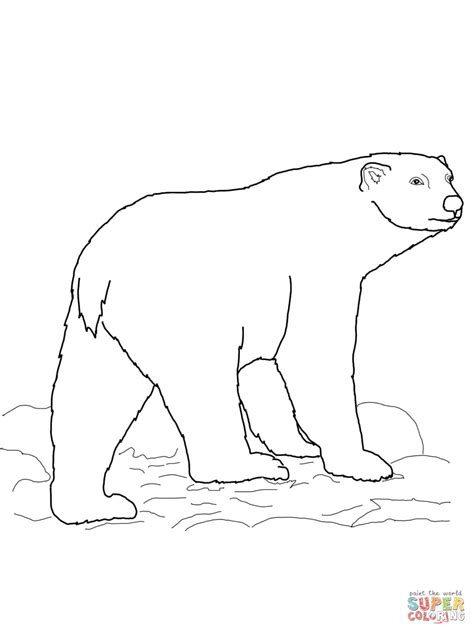 Polar Bear Cubs Coloring Pages