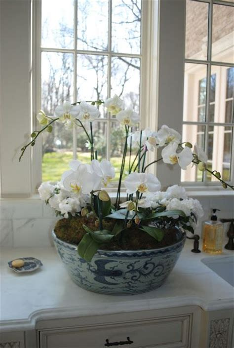 Big White Planters by Beautiful White Orchids In Blue White Planter So