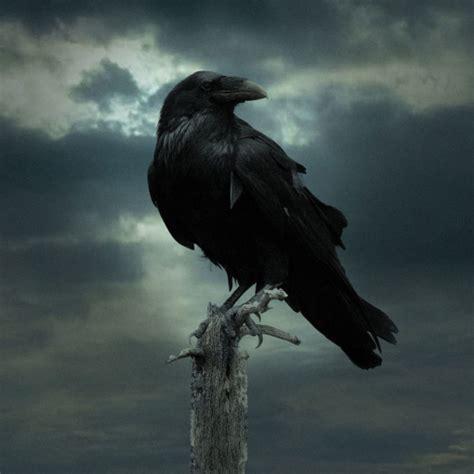 game  thrones poster forum avatar profile photo id