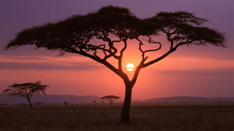 african sunset wallpapers hd wallpapers id