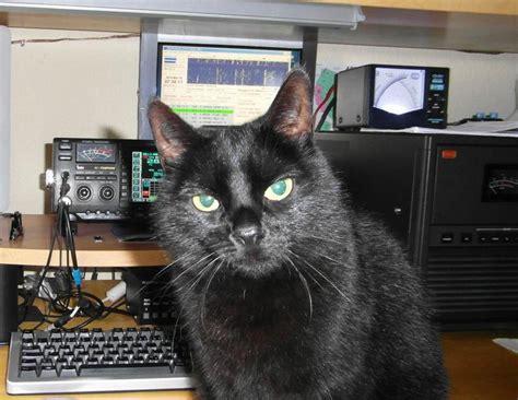 dlxj callsign lookup  qrz ham radio