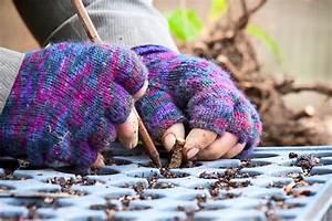 Five Methods Of Plant Propagation