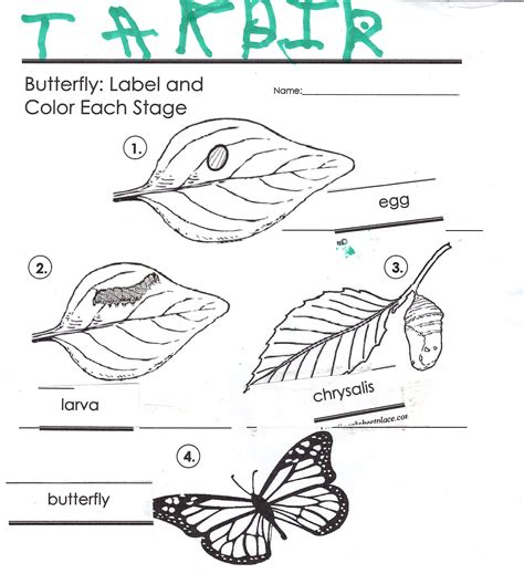 the butterfly life cycle habeebee homeschooling