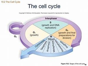 What Happen To The Body When There Is Uncontrolled Cell