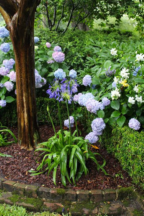 classic charleston garden focused  shrubs  trees hgtv