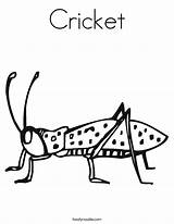 Cricket Coloring Worksheet Crickets Insect Pages Twisty Tracing Animal Grillos Twistynoodle Noodle Outline Bug Printable Insects Sheet Getcoloringpages Learning Dibujos sketch template
