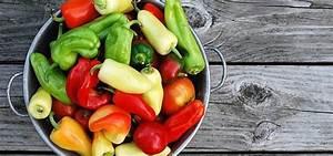 Paprika Pflanzen Pflege : paprika pflanzen alles zu anbau pflege und ernte ~ Markanthonyermac.com Haus und Dekorationen