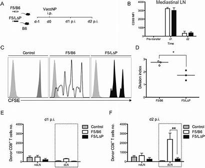 Expansion Tcr Clonal Shedding Cells Selectin Induced