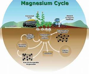 Magnesium Cycle | www.pixshark.com - Images Galleries With ...
