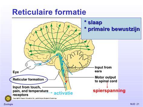 Spraakgebied hersenen