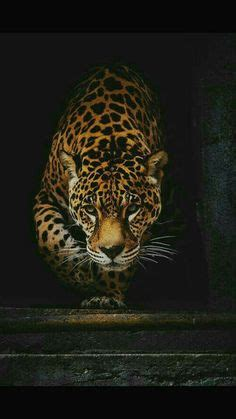 Jaguar Animal Iphone Wallpaper - animal jaguar iphone wallpaper animals iphone