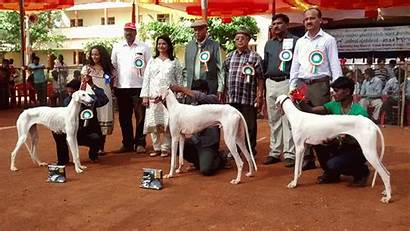 Dog Indian Breeds Dogs Specialty 2nd Society