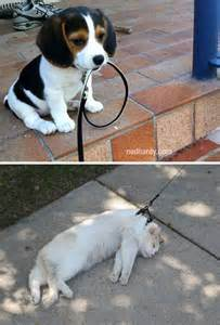 Funny Cats Vs. Dogs