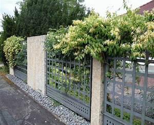 sichtschutz mit pflanzen welche pflanzen als sichtschutz With französischer balkon mit maulwürfe bekämpfen garten