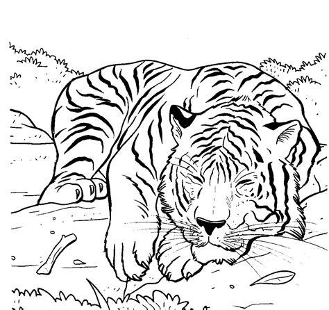 tiger coloring pages coloringsuitecom