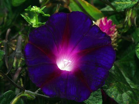 Flowers Wallpapers Purple Flowers Wallpapers