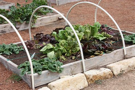 musings from the hill country square foot gardening