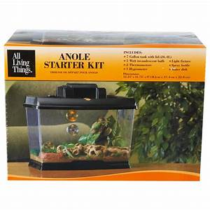 Green Anole Tank Related Keywords - Green Anole Tank Long ...
