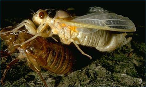 cicada shedding its exoskeleton what is an arthropod