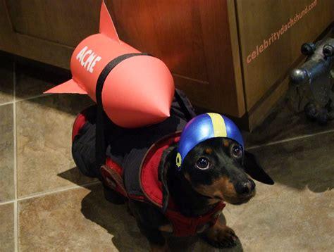 SuperDog Photo Contest & Dachshund Halloween Costumes ...