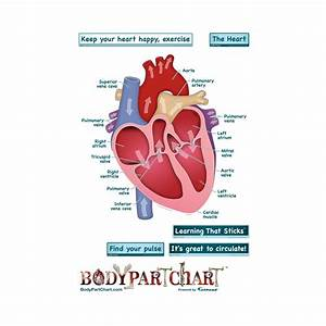 Simplified Heart  Labeled