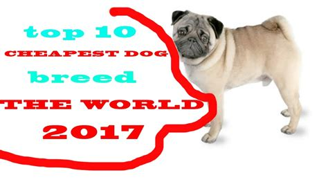Top 10 Cheapest Dog Breeds In The World 2017 Youtube