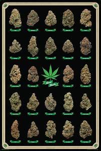 Drug Types Chart Best Buds Marijuana Strains Id Chart Poster 61x91cm