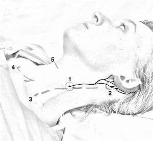 Face,Head & Neck — Highland EM Ultrasound Fueled pain ...