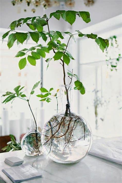 plante dans la chambre la plante verte d 39 intérieur archzine fr