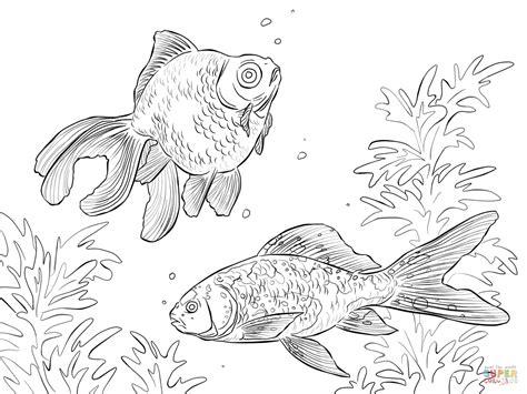El Dorado Kleurplaat by Black Moor And Shubunkin Goldfishes Coloring Page Free