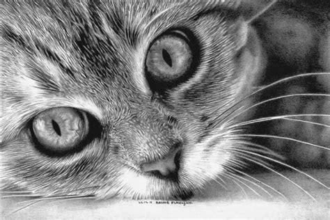 beautiful realistic cat drawings  inspire  fine