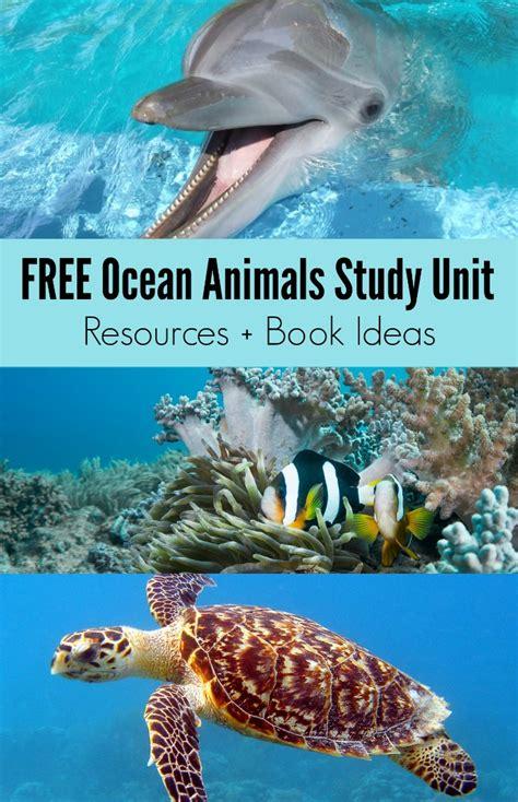 books  sea animals  ocean animals study unit